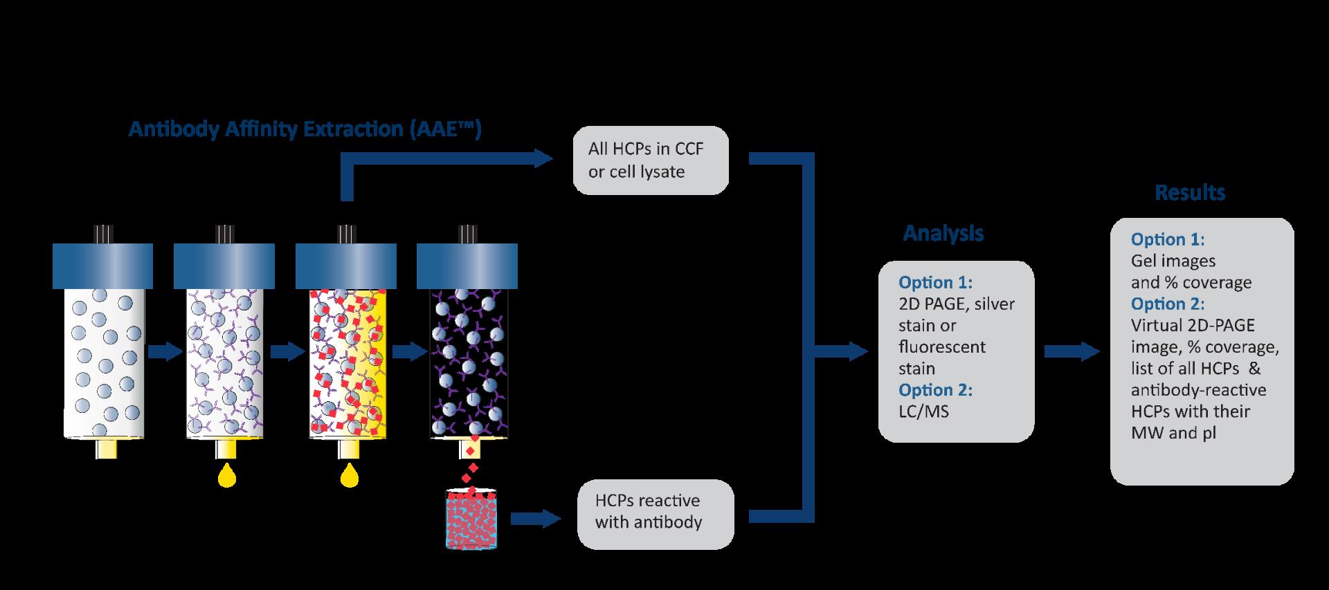 Antibody-Affinity-Extraction_AAE__11-20-01_002_