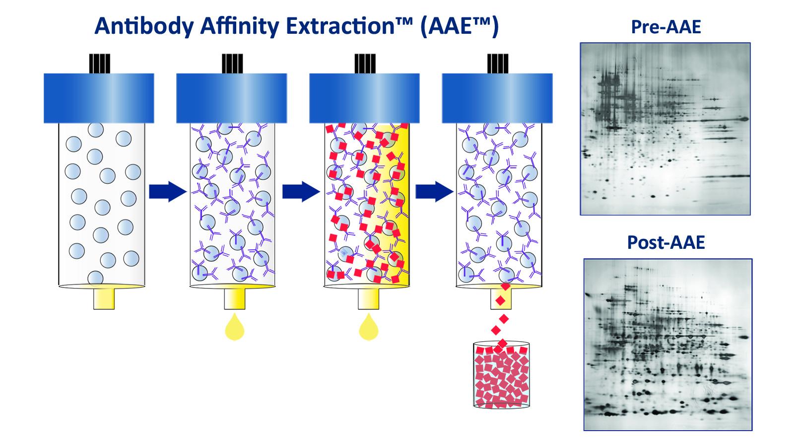 Antibody-Affinity-Extraction_AAE_diagram_F.1200x667