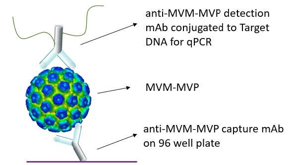 MVM-MVP_Kit_Flyer